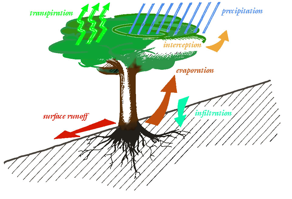 Components of the hydrological cycle